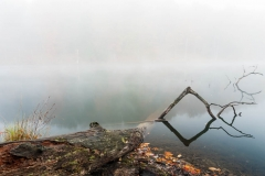 Rose Lake Fallen Tree Fog